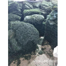 machine dried kelp high quality